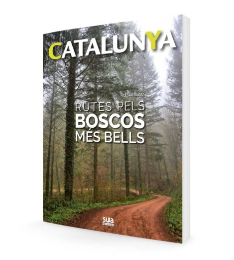 ct-boscosinternet